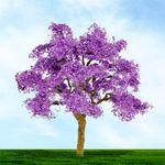 """6"""" Purple Jacaranda Tree"""