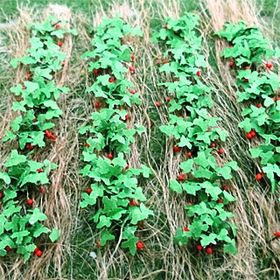 "3/8""H Strawberries 18Pack"