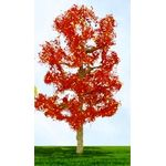 "8"" Autumn Sycamore Tree Red"
