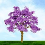 "6"" Purple Jacaranda Tree"